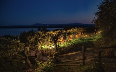 2021 Wedding at The Olive Grove